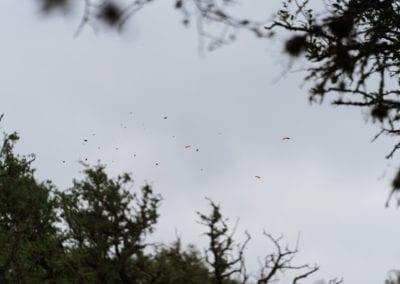 Clay Pigeon shot