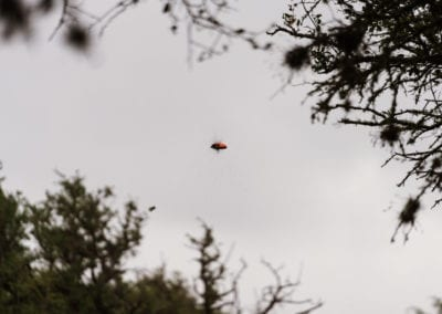 Clay Pigeon Exploding